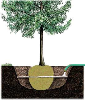 Trees Plus grows, sells and transplants trees that are healthy, hardy and guaranteed to survive.